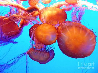 Photograph - Jellyfish Xii by Elizabeth Hoskinson