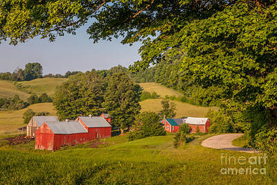 Photograph - Jenne Farm In Summer by Susan Cole Kelly