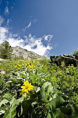 Photograph - Jenny Lake Mountainside by Crystal Wightman