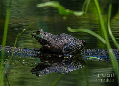 Photograph - Jeremiah Was A Bullfrog by Cheryl Baxter