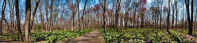 Photograph - Jersey Swamp  by Robert Culver
