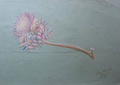 Drawing - Jerusalem Thorn by Esther Newman-Cohen