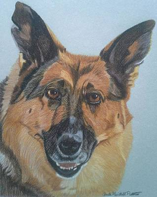 Drawing - Jessie- German Shepherd Dog Commission by Anita Putman