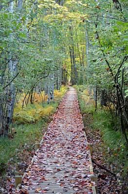 Jessup Path Acadia National Park Art Print
