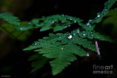 Photograph - Jeweled Fern by Chris Heitstuman