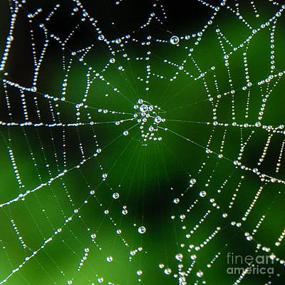 Photograph - Jeweled Web by Grace Grogan