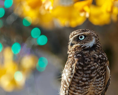 Photograph - Jeweled Owl by Wes and Dotty Weber