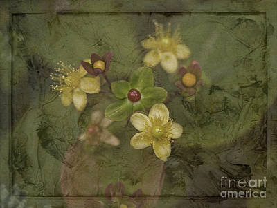 Photograph - Jewels In Green Velvet by Liz  Alderdice
