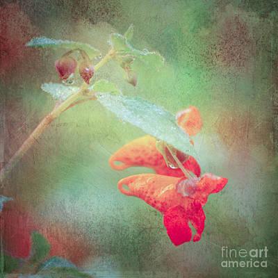 Digital Art - Jewelweed by Kerri Farley