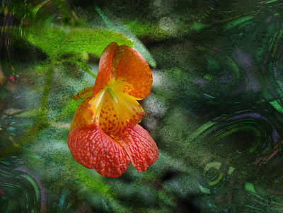 Digital Art - Jewelweed by Melinda Fawver