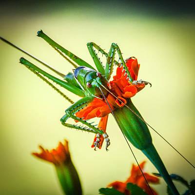 Jiminy Cricket Art Print by Wally Taylor