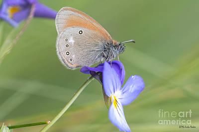 Impressionist Landscapes - jn10 Chestnut Heath Butterfly by Jivko Nakev