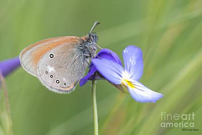 Travel - jn12 Chestnut Heath Butterfly by Jivko Nakev
