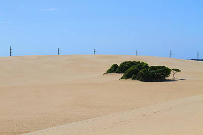 Jockey's Ridge 27 Art Print by Cathy Lindsey