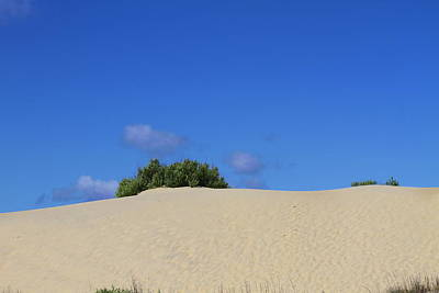 Outer Banks Photograph - Jockey's Ridge 29 by Cathy Lindsey