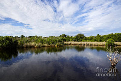 Joe Fox Fine Art - Flooded Grasslands And Mangrove Forest In The Art Print by Joe Fox