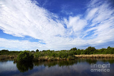 Joe Fox Fine Art - Flooded Grasslands With Mangrove Forest In The Background In The Florida Everglades Us Art Print by Joe Fox