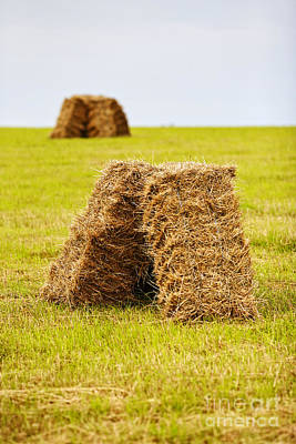Joe Fox Fine Art - Hay Bales Drying In A Field At Harvest Time Art Print by Joe Fox