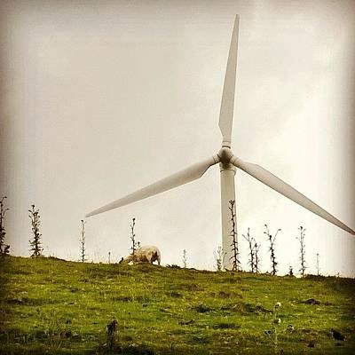 Sheep Photograph - Joe Hockey May Find Turbines utterly by Philip Murphy