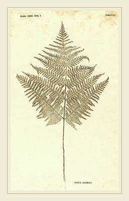 Dried Drawing - Johann Hieronymus Kniphof German, 1704-1763 by Litz Collection