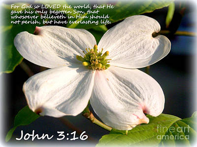 John 3-16/dogwood Legend Art Print