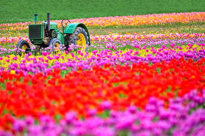 Photograph - John Deere And Tulips by Joseph Bowman