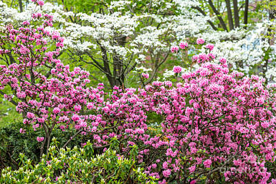Photograph - John Fitzgerald Kennedy Park In Bloom by Susan Cole Kelly