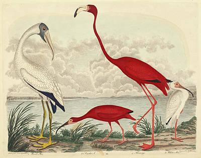 Ibis Drawing - John G. Warnicke After Alexander Wilson, Wood Ibis, Scarlet by Quint Lox