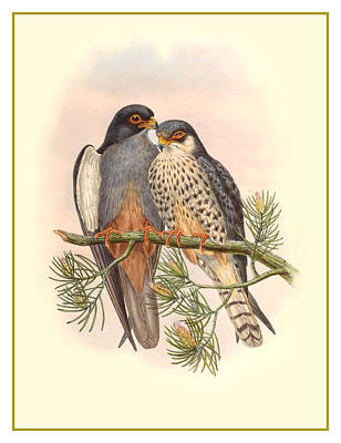 John Gould Birds Art Print by Gary Grayson