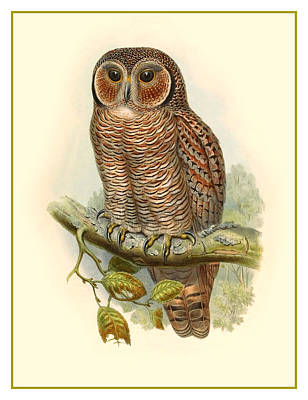 Painting - John Gould Owl by Gary Grayson
