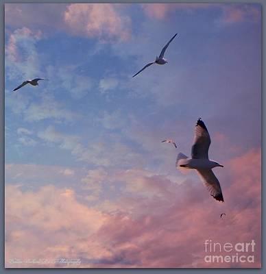 Photograph - Jonathan Fly Free by Bobbee Rickard