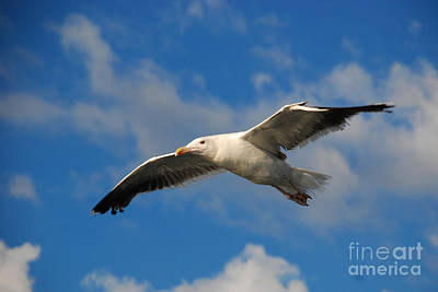 Jonathan Livingston Art Print