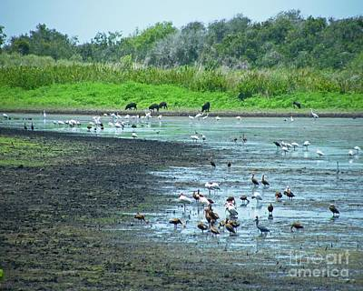Photograph - Jones Pond Aransas Nwr Texas by Lizi Beard-Ward