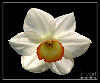 Art Print featuring the photograph Jonquil 1 by Rose Santuci-Sofranko