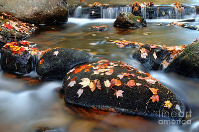 Jordan Stream Photograph - Jordan Stream  by Matthew Yeoman