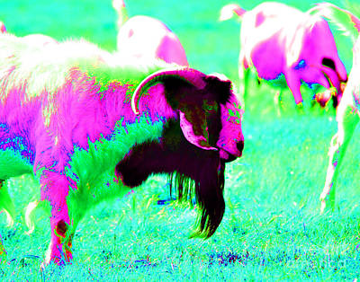 Photograph - Joseph's Goat Of Many Colors by Linda Cox