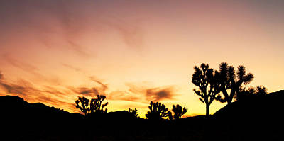Photograph - Joshua Sunrise by Kunal Mehra