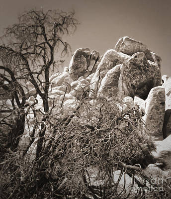 Photograph - Joshua Tree - 07 by Gregory Dyer