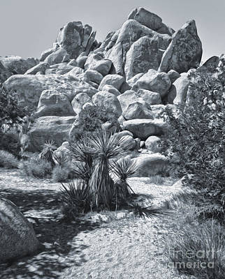 Joshua Tree - 09 Art Print by Gregory Dyer