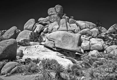 Joshua Tree - 15 Art Print by Gregory Dyer