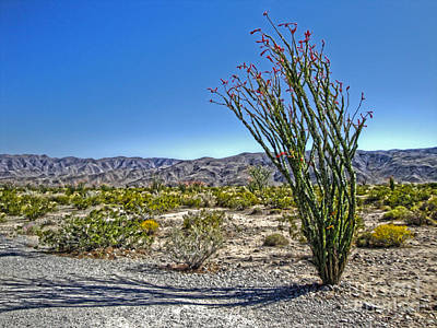 Painting - Joshua Tree - 19 by Gregory Dyer