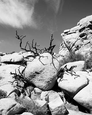 Beers On Tap - Joshua Tree 25 by Alex Snay