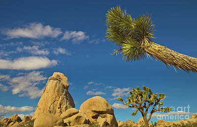 Photograph - Joshua Tree Rocks And Sky by Yva Momatiuk John Eastcott