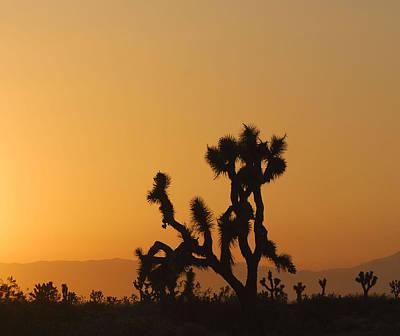 Photograph - Joshua Tree At Sunset by Juli Scalzi