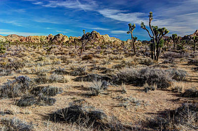 Photograph - Joshua Tree Beauty by Heidi Smith