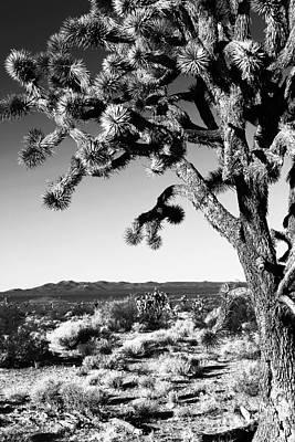 Photograph - Joshua Tree Bw by John Rizzuto