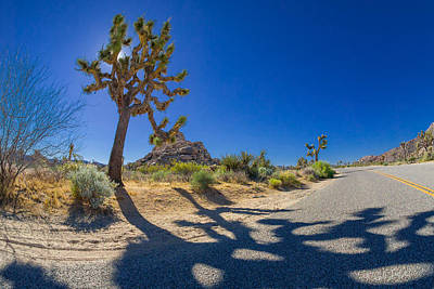 Photograph - Joshua Tree Crossing by Scott Campbell