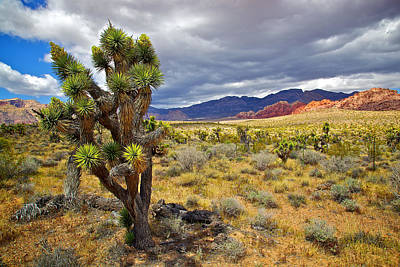 Photograph - Joshua Tree In Red Rocks by Joe Urbz
