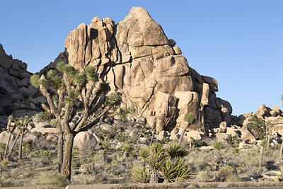 Photograph - Joshua Tree National Monument  by Carol M Highsmith
