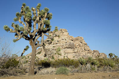 Photograph - Joshua Tree National Park  by Carol M Highsmith